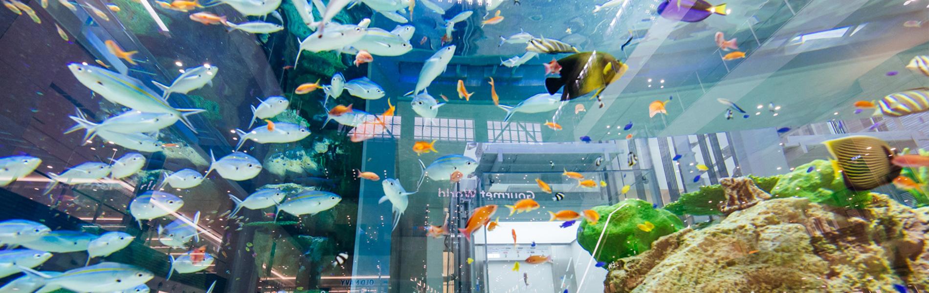 マンタやサメの飼育観察体験ツアー 沖縄美ら海水族館の調査研究施設で飼育生物を観察しよう!
