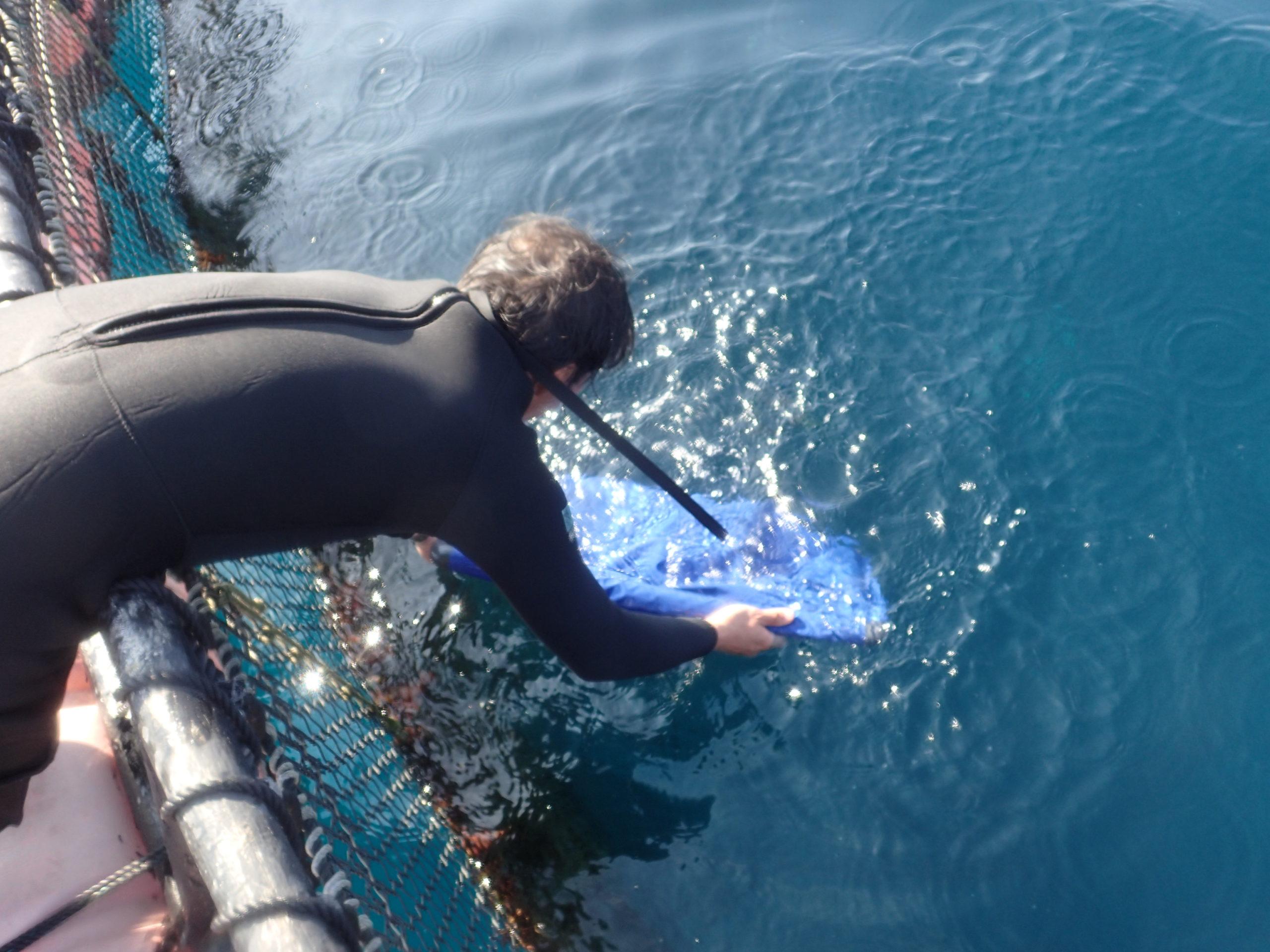 観賞魚販売事業が「沖縄タイムス」で紹介されました。