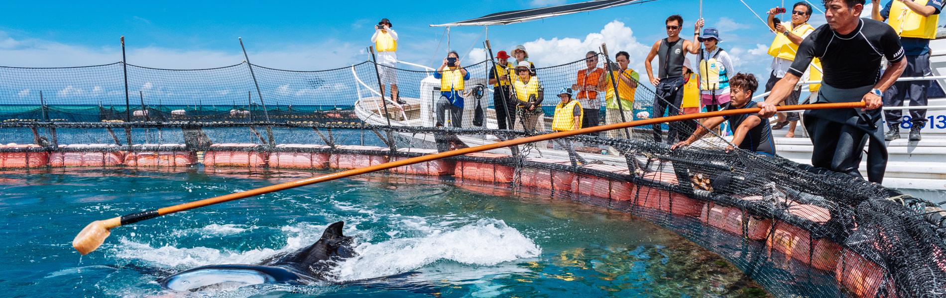 マンタやサメの飼育観察体験ツアー